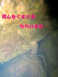 1_img_1054tiltshift